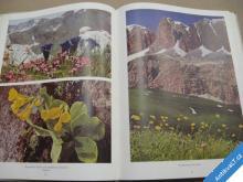 Es blüht in den Dolomiten Schälow Ernst 1955