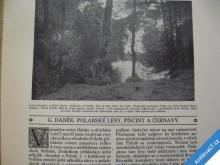 KRÁSA NAŠ. DOMOVA 1912 POLABÍ LESY PÍSČINY ČERNAVY